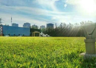 西侧草坪(森林背景)